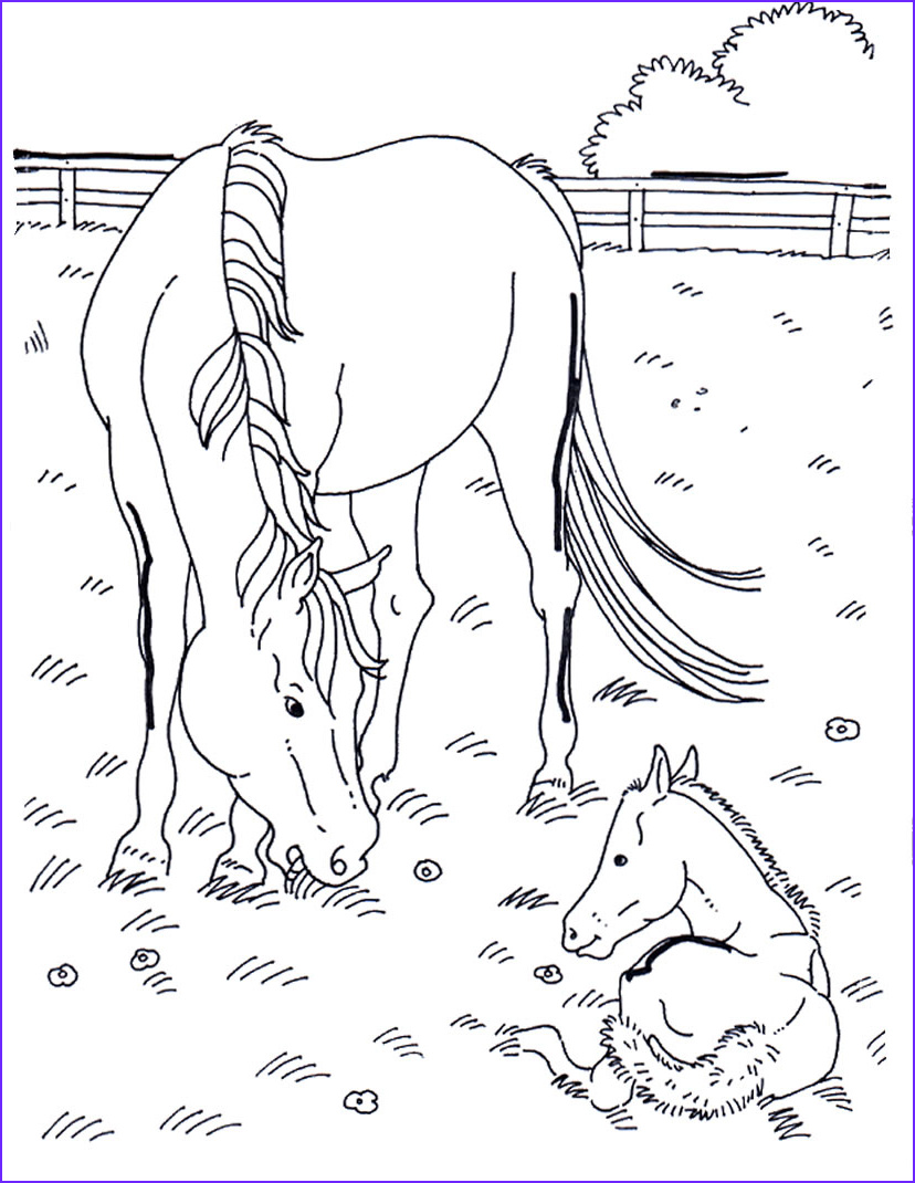 Adult Horse Coloring Book Unique Image Horses 13 Adult Coloring Pages