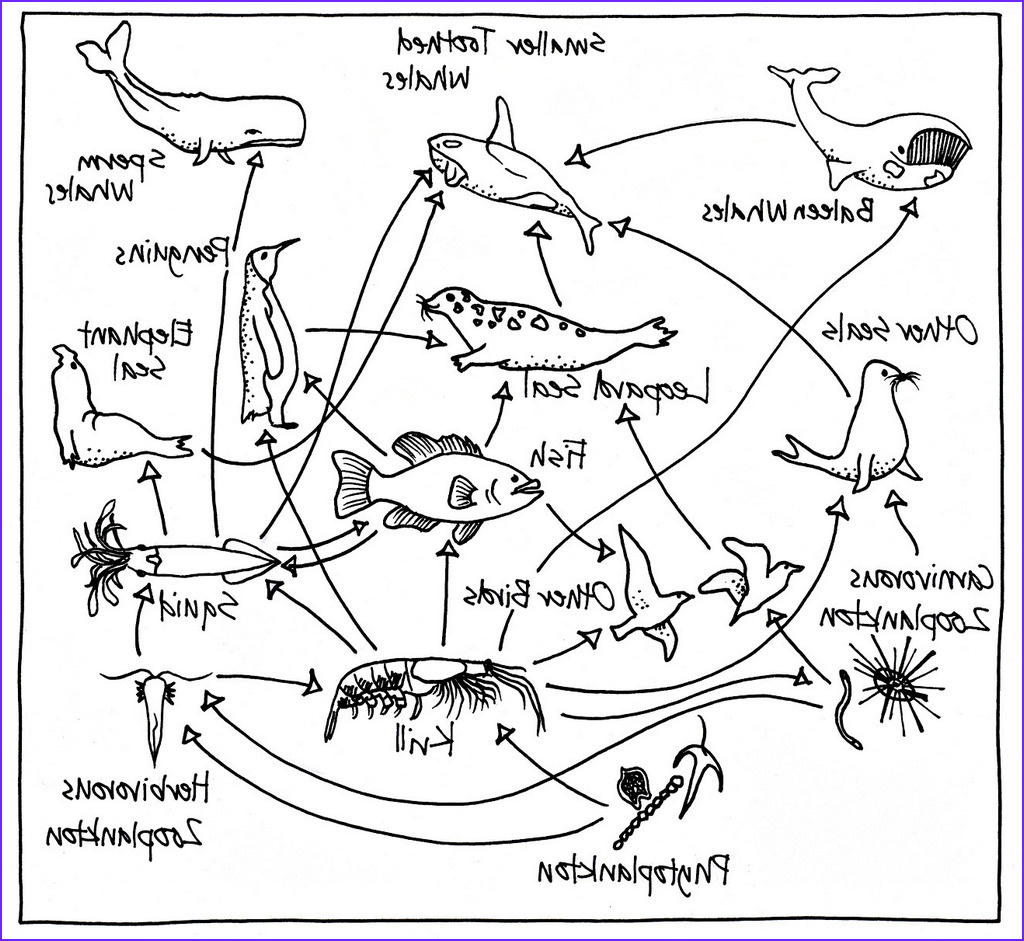 food chains and webs coloring pages for preschool children