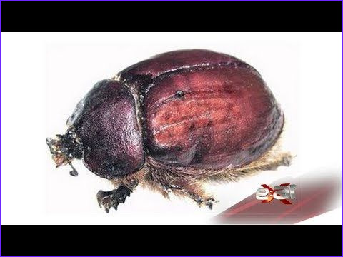Bug Food Coloring Beautiful Images 16x9 Beetle Juice Bugs In Our Food
