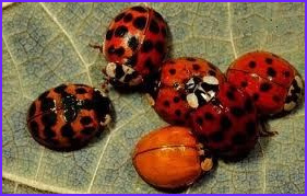 Bug Food Coloring Best Of Photos Car Poolin Lady Bugs