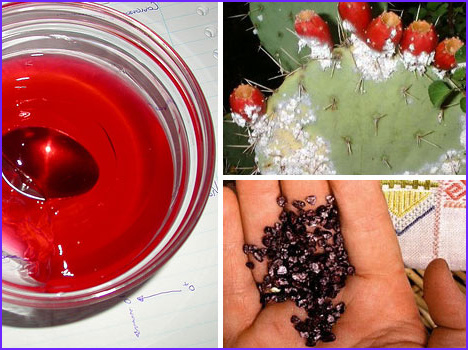 Bug Food Coloring Unique Photos top 10 Gross Ingre Nts