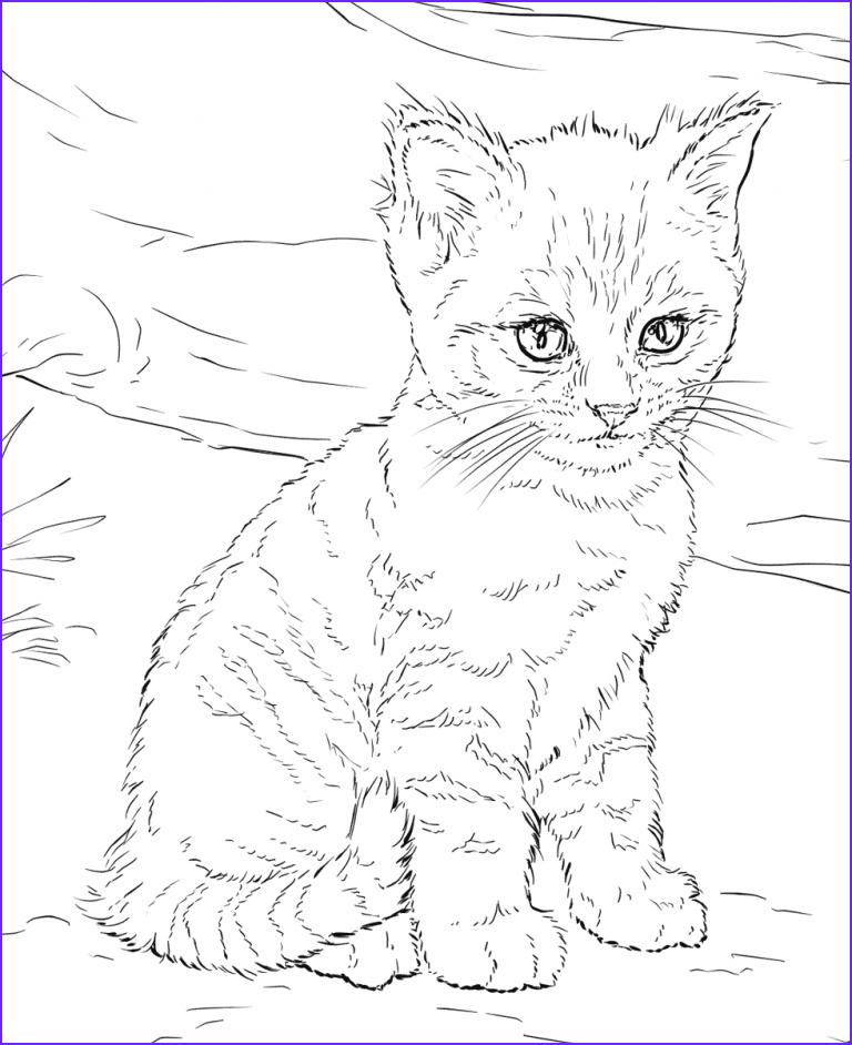 Cat Adult Coloring Page Inspirational Photos Cat Coloring Pages for Adults