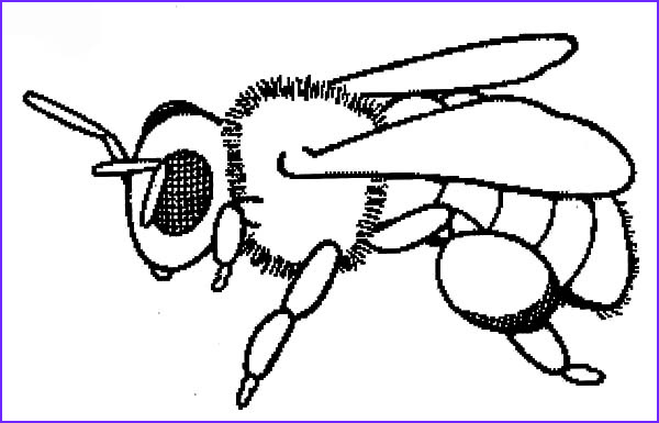 Coloring Page Of Bees Awesome Photos Baby Honey Bee Coloring Pages Coloring Sky
