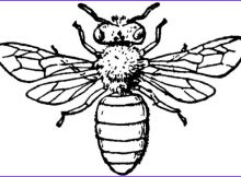 Coloring Page Of Bees Luxury Photos Insect Honey Bee Coloring Pages