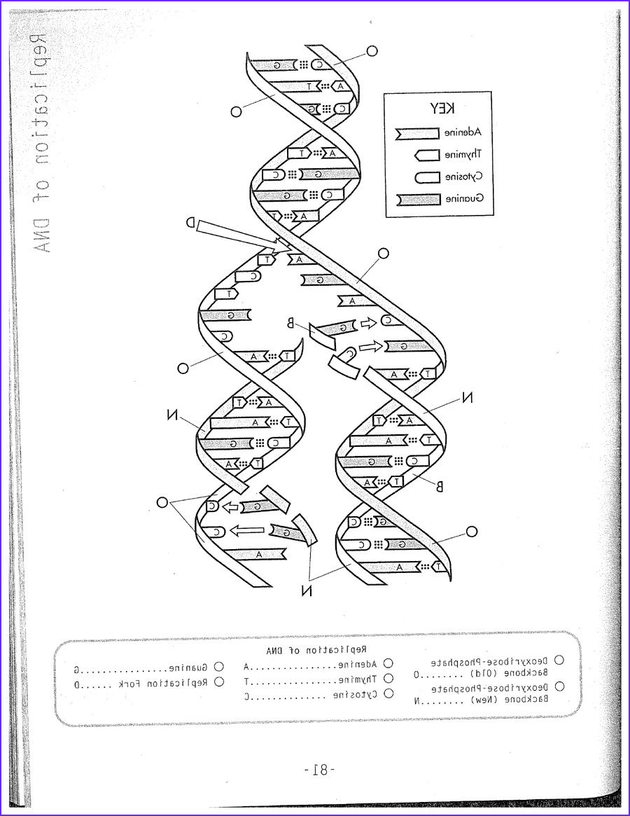 dna model drawing
