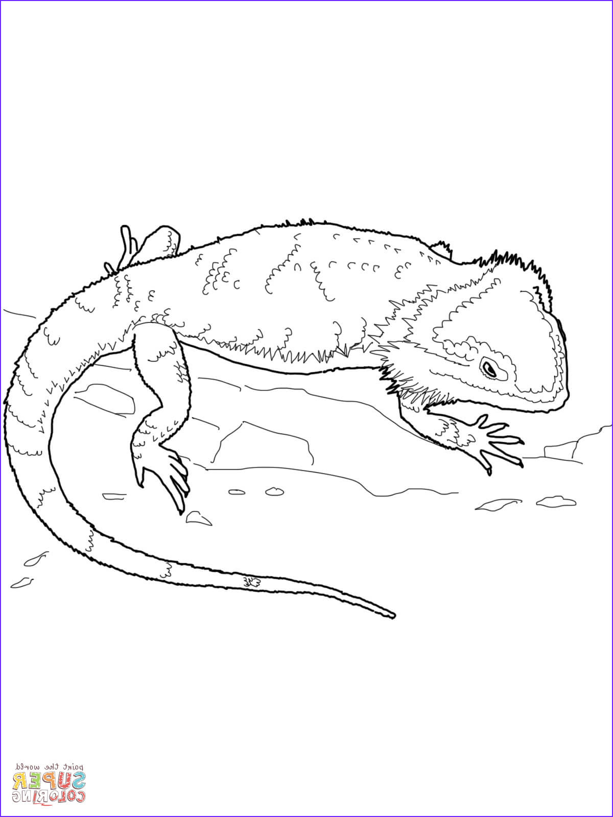 bearded dragon coloring pages dragoart sketch templates