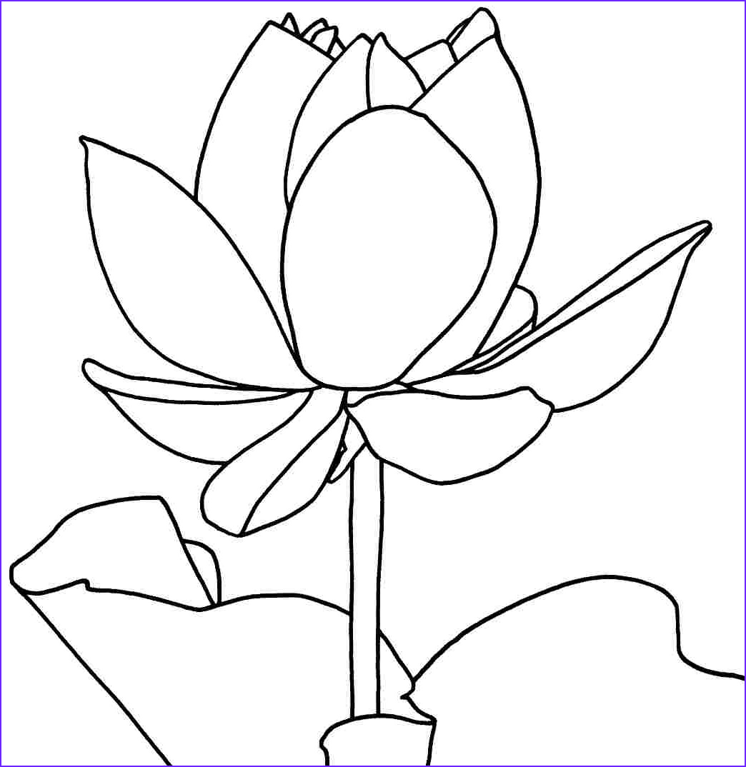 Flower Coloring Book Page Beautiful Image Free Printable Lotus Coloring Pages for Kids