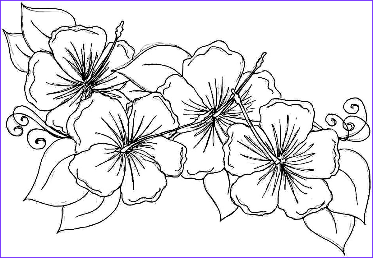 Flower Coloring Book Page Luxury Gallery Free Printable Hibiscus Coloring Pages for Kids