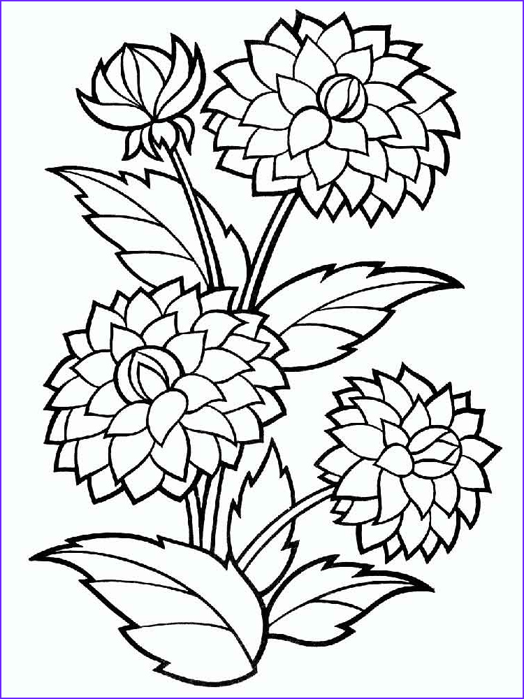 Flower Coloring Book Page Unique Gallery Dahlia Flower Coloring Pages Download and Print Dahlia