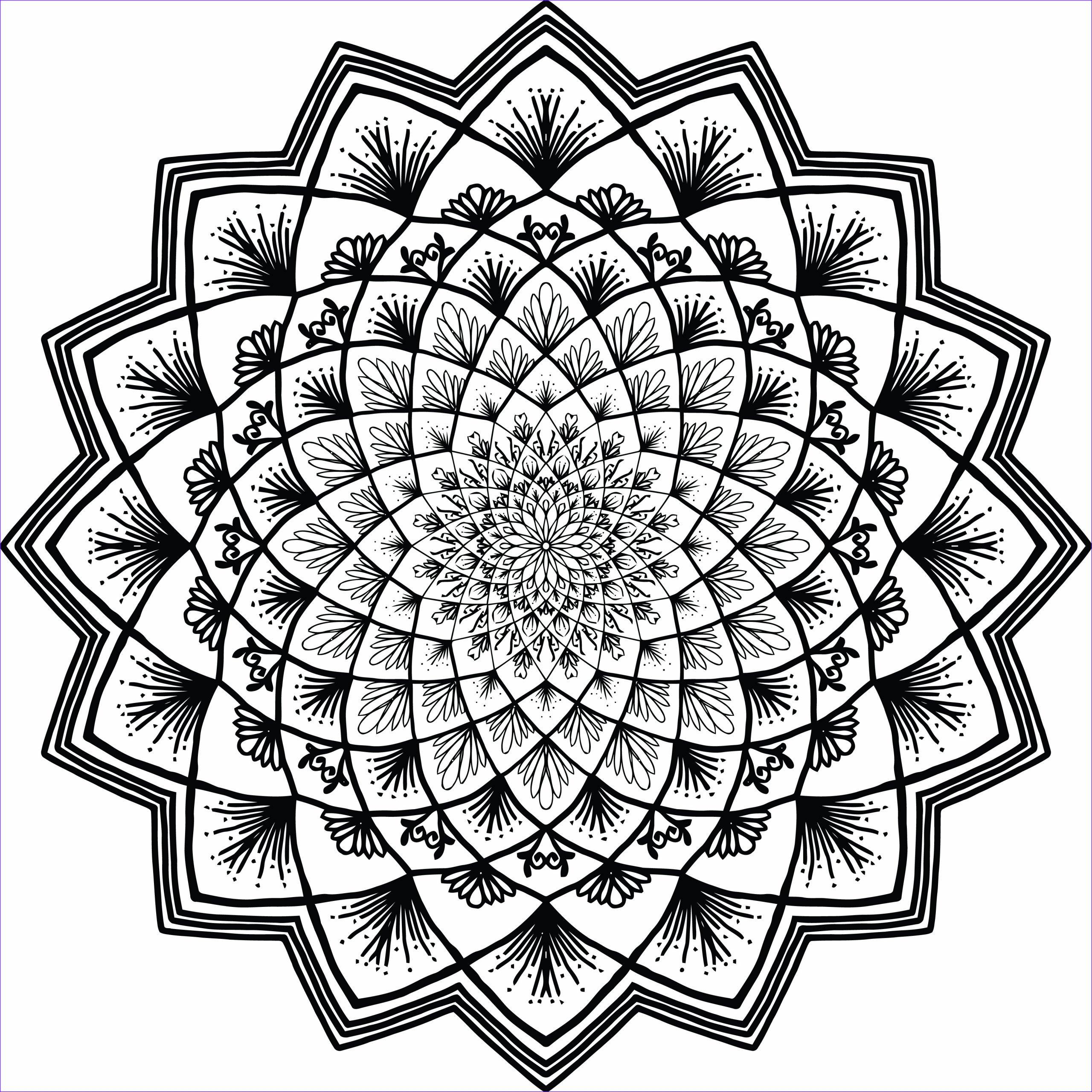 241 Free Clipart A Black And White Adult Coloring Page Floral Mandala
