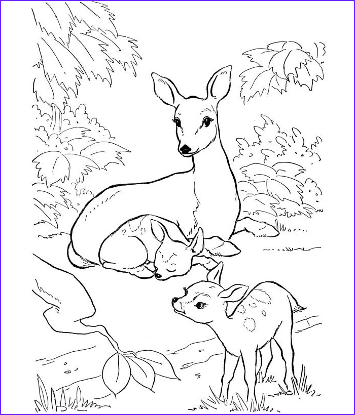 Free Printable Deer Coloring Page Awesome Photos 45 Deer Templates Animal Templates