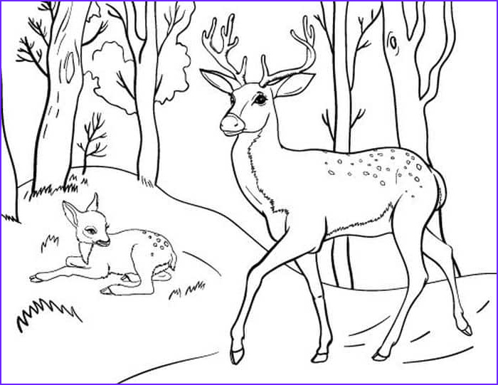 Free Printable Deer Coloring Page Beautiful Photography Deer Coloring Pages