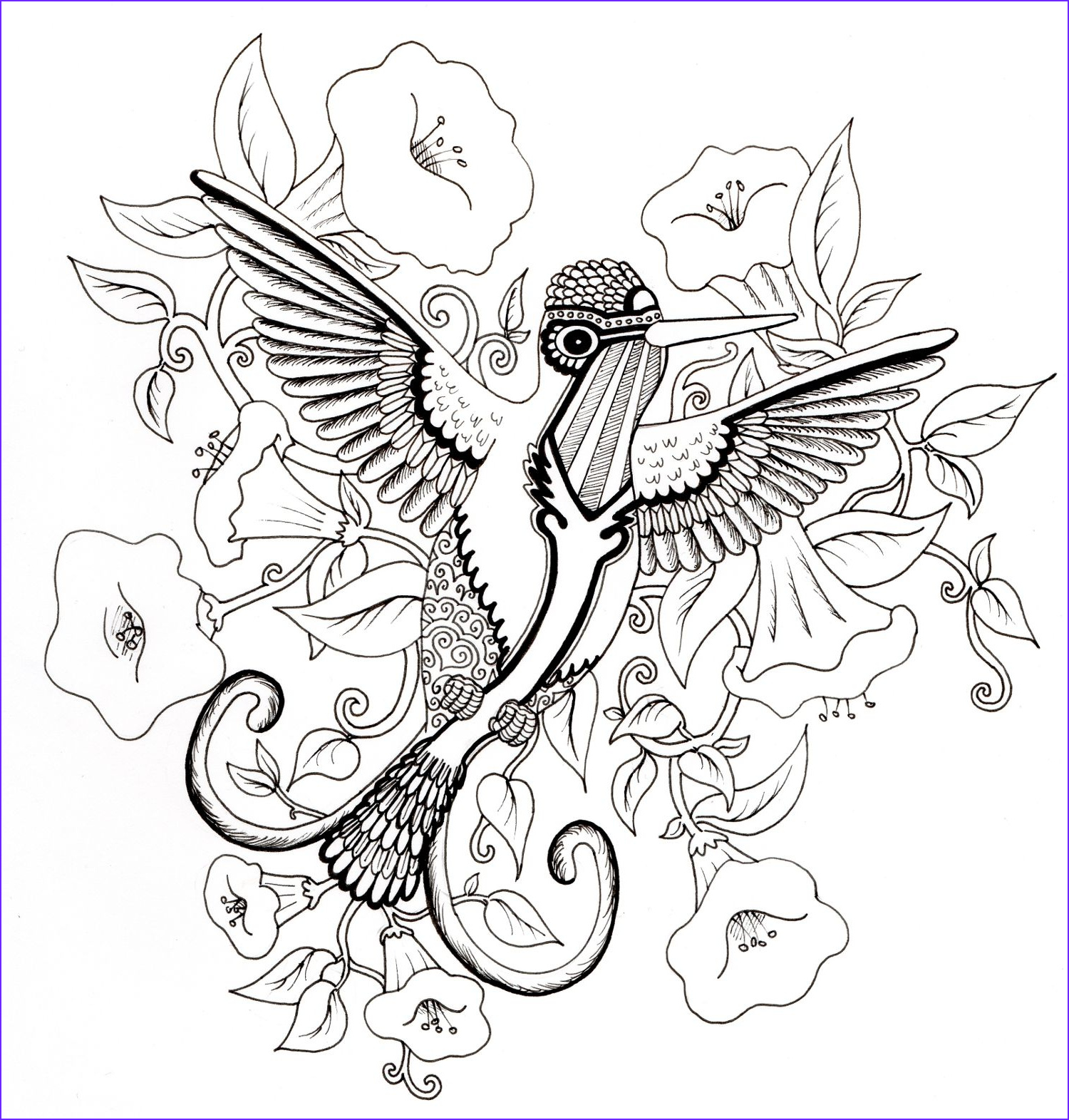 Hummingbird Coloring Page For Adults Awesome Photos