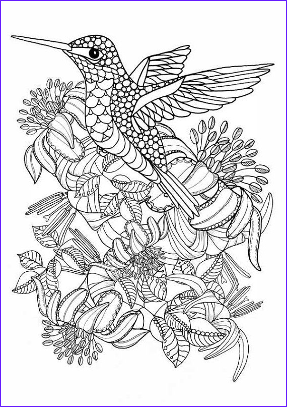 Hummingbird Coloring Page For Adults Best Of Photos Hummingbird Printable Coloring Pages Digital Of