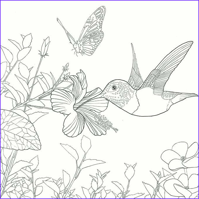 Hummingbird Coloring Page For Adults Best Of Photos Legendary Worlds Adult Colouring Book Hummingbird By