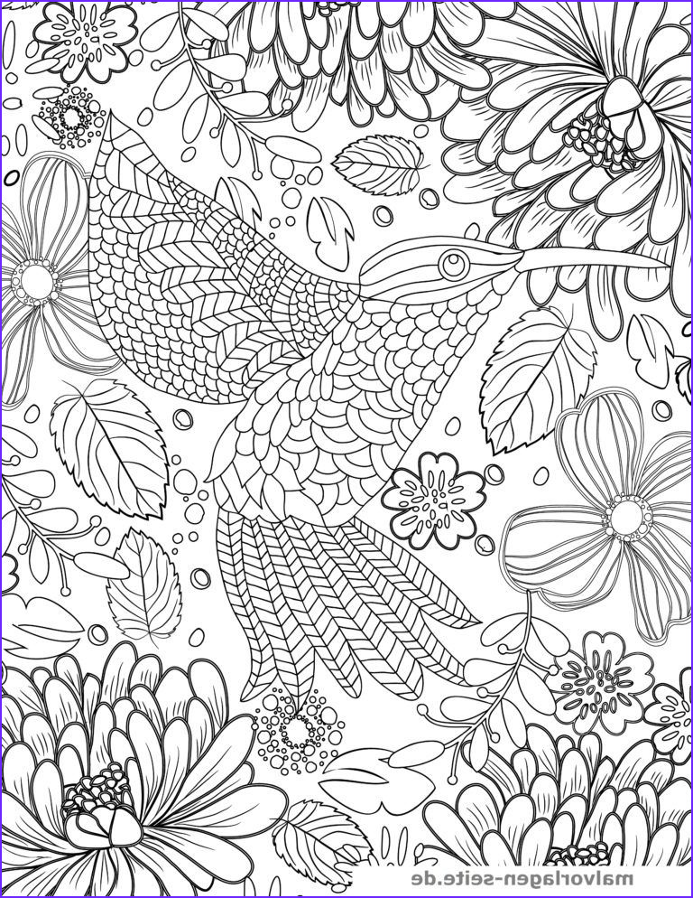Hummingbird Coloring Page For Adults Unique Stock Coloring Page Hummingbird For Adults