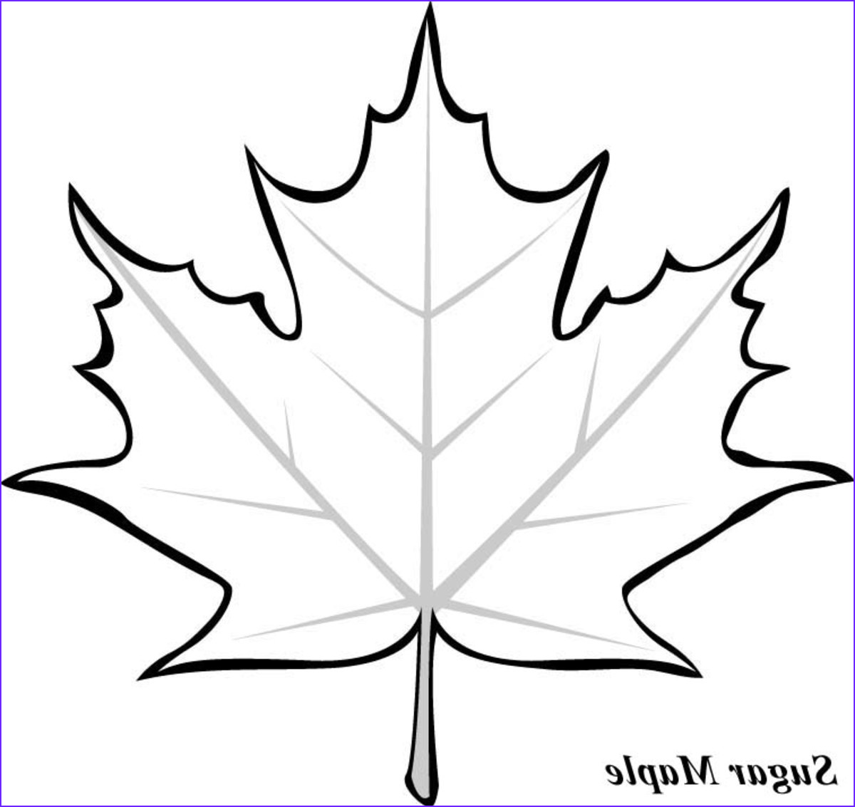 Maple Tree Coloring Luxury Stock Leaf Printable Coloring Pages