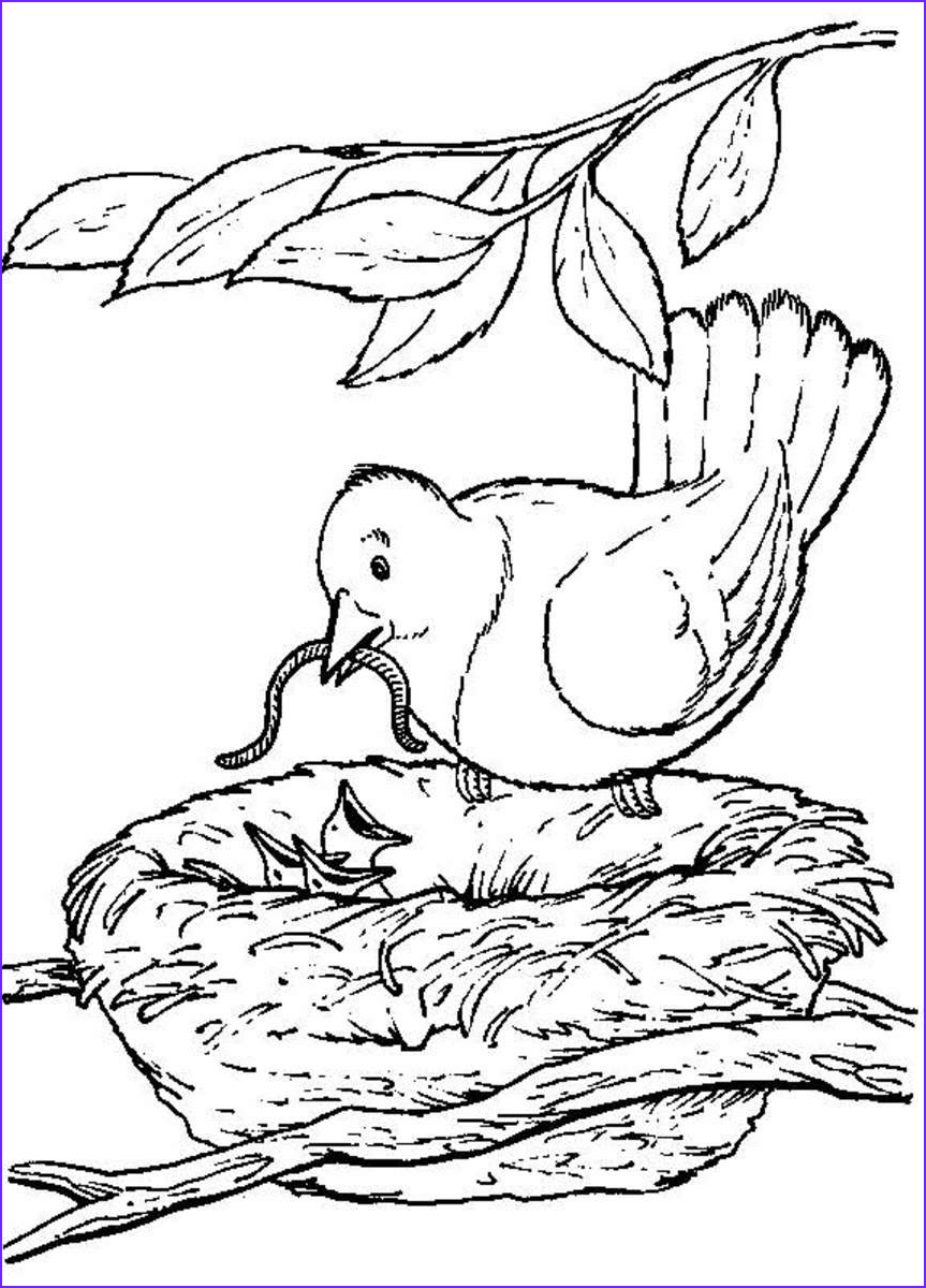 Nest Coloring Page New Stock Backyard Animals and Nature Coloring Books Free Coloring