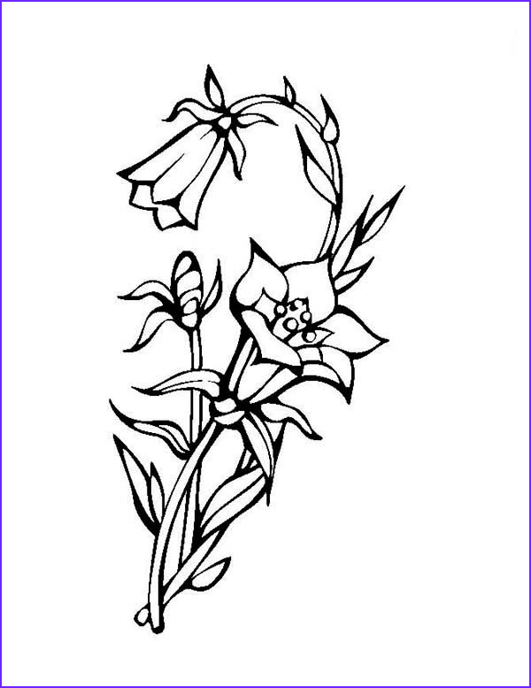 beautiful blooming lily flower coloring page