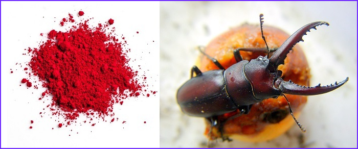 Red Food Coloring Bugs Cool Photos Crushed Bugs as Red Food Coloring Food Ideas