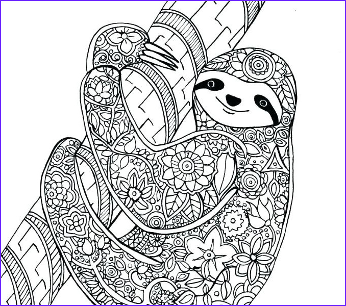 baby sloth coloring pages