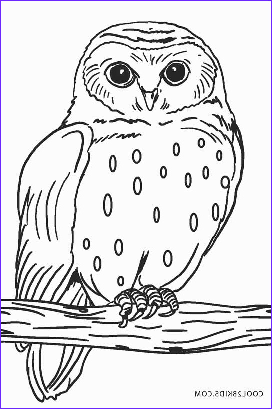 Snow Owl Coloring Page Beautiful Images Free Printable Owl Coloring Pages for Kids