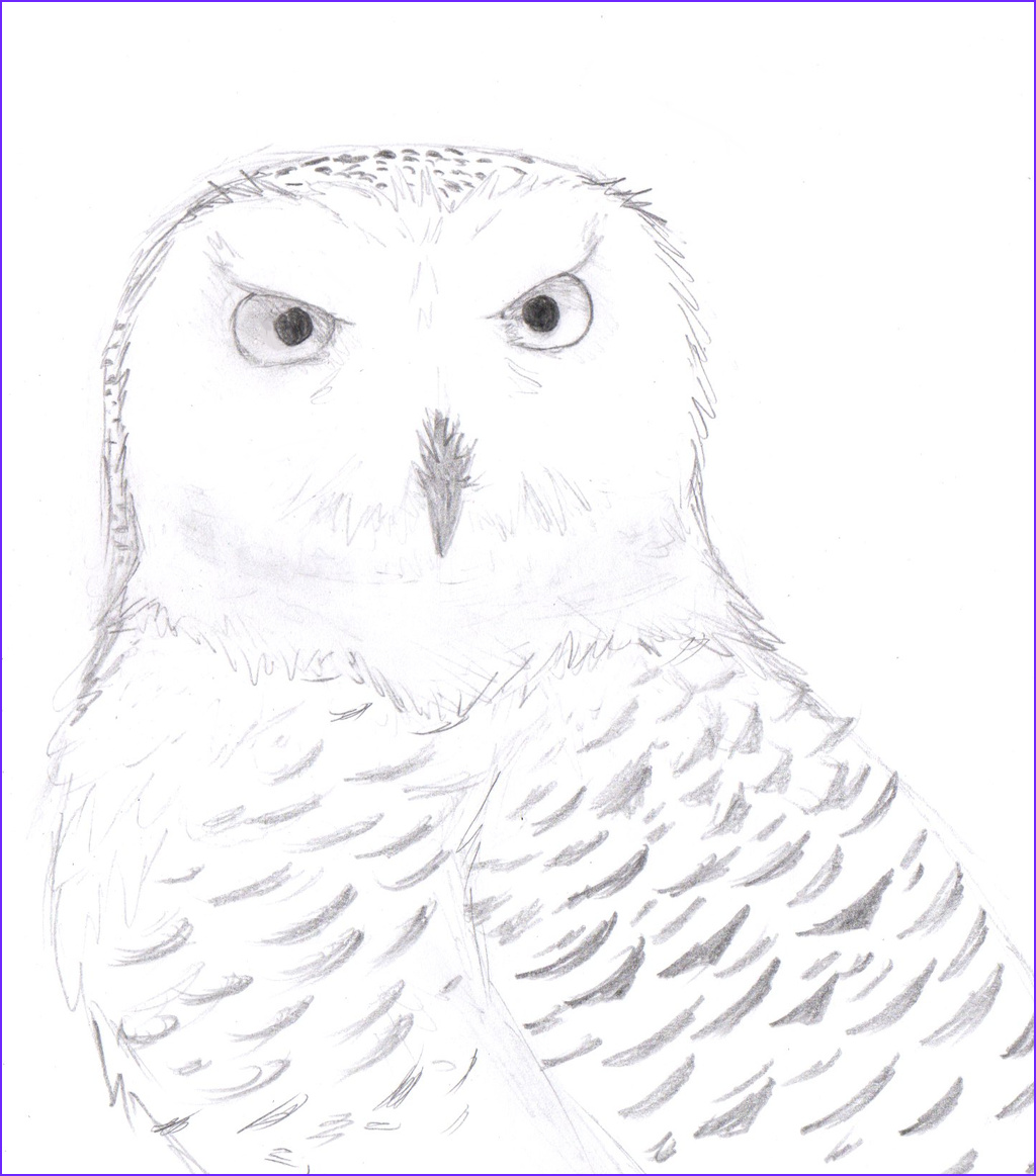 Snow Owl Coloring Page Best Of Photos Snowy Owl Face Coloring Pages