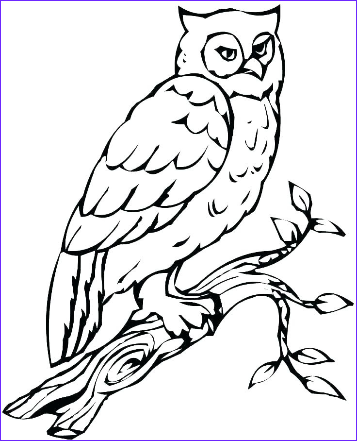 Snow Owl Coloring Page Elegant Photography Snowy Owl Drawing