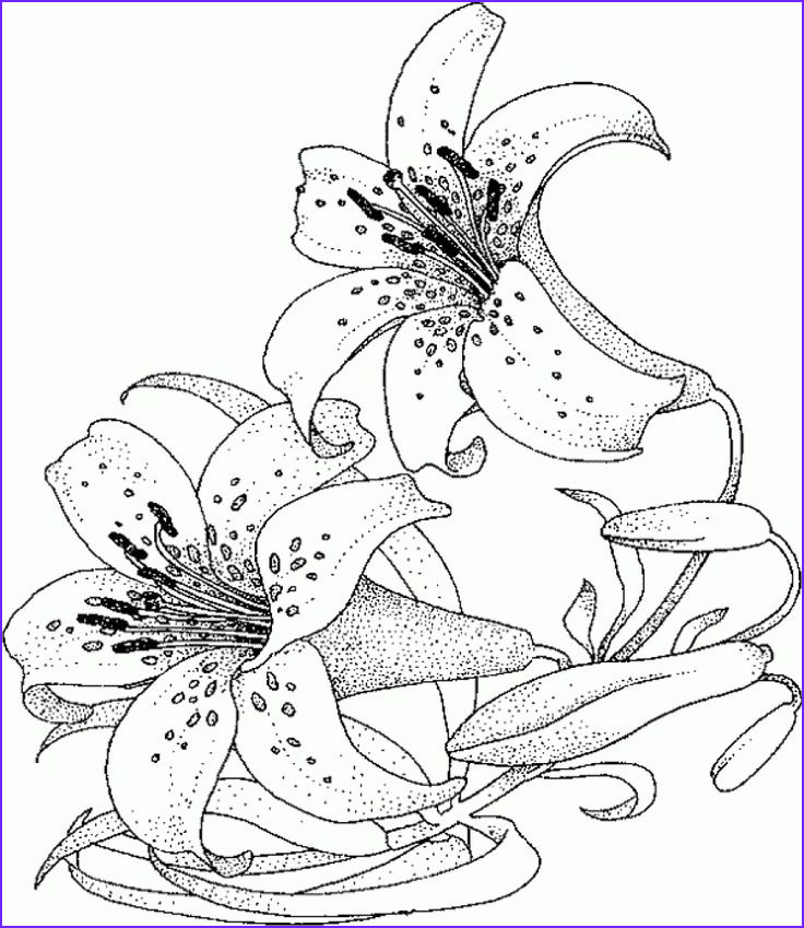 Water Coloring Book For Adults Beautiful Photography Realistic And Detailed Water Lily Flower Coloring Page For