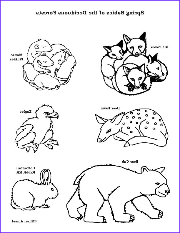 Woodland Animals Coloring Page Cool Stock Baby Animals Of the Deciduous forest – Coloring Nature