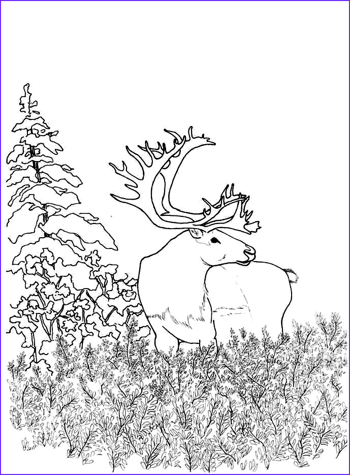 Woodland Animals Coloring Page Cool Stock Woodland Animals Coloring Pages Coloring Home