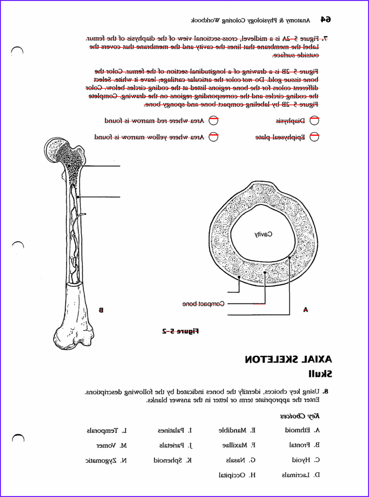 Anatomy and Physiology Coloring Workbook Answers Chapter 1 Beautiful Photos Anatomy and Physiology Coloring Workbook Answers Chapter 6