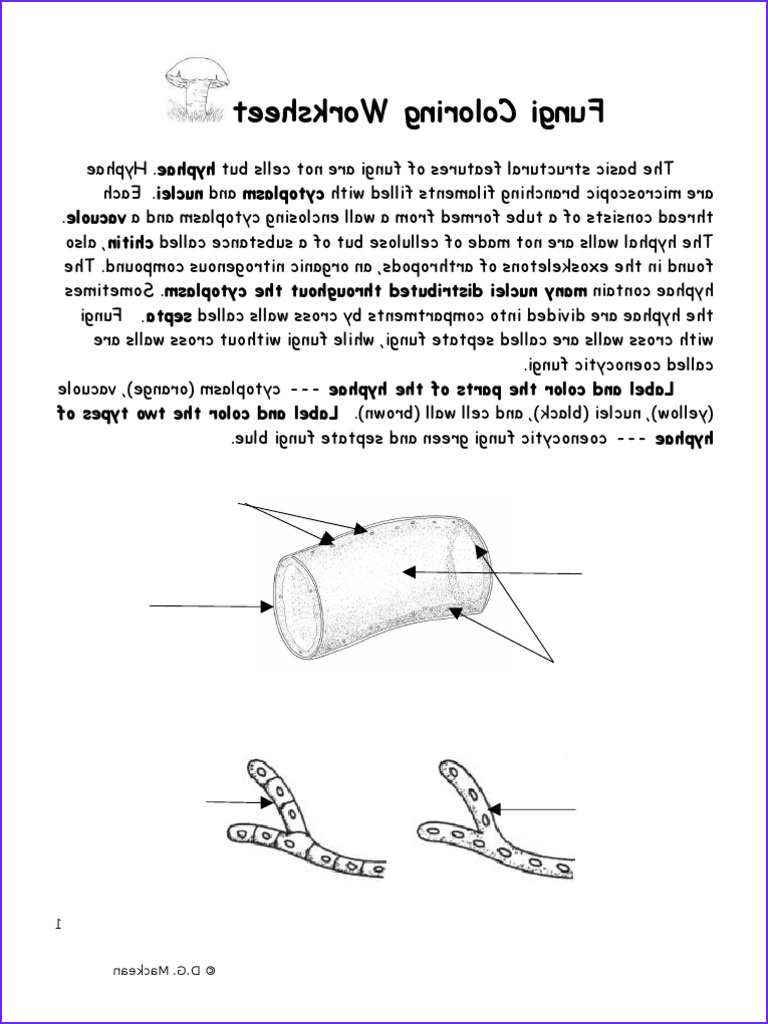 Fungi Coloring Worksheet Best Of Collection Fungi Coloring Worksheet Mushroom