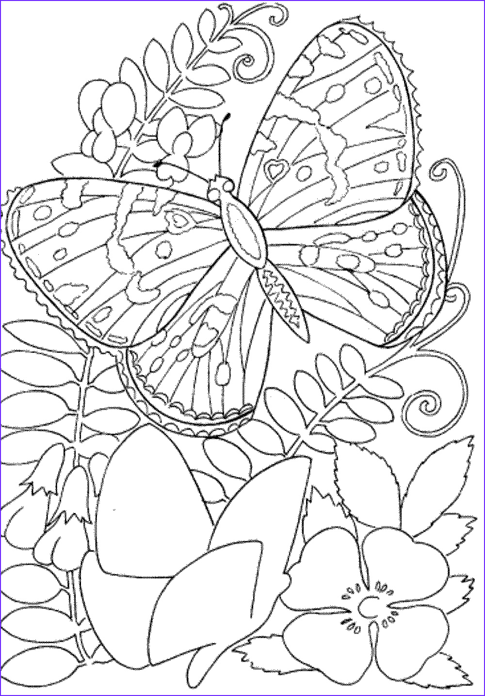 Adult Coloring Book Printable New Collection Free Owl Adult Coloring Pages to Print Coloring Home