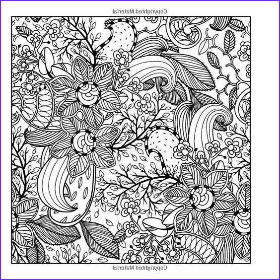 Amazon Adult Coloring Books A Coloring Book for
