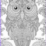 Adult Coloring Books Amazon Luxury Photos 4541 Best Images About Coloring On Pinterest