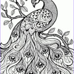 Adult Coloring Books For Stress Unique Collection Best 25 Adult Coloring Ideas On Pinterest