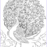 Advanced Coloring Books Awesome Photos 81 Best Images About Turkeys On Pinterest