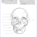 Anatomy And Physiology Coloring Workbook Answer Key Chapter 4 Unique Photos Anatomy And Physiology Coloring Workbook Coloring Pages