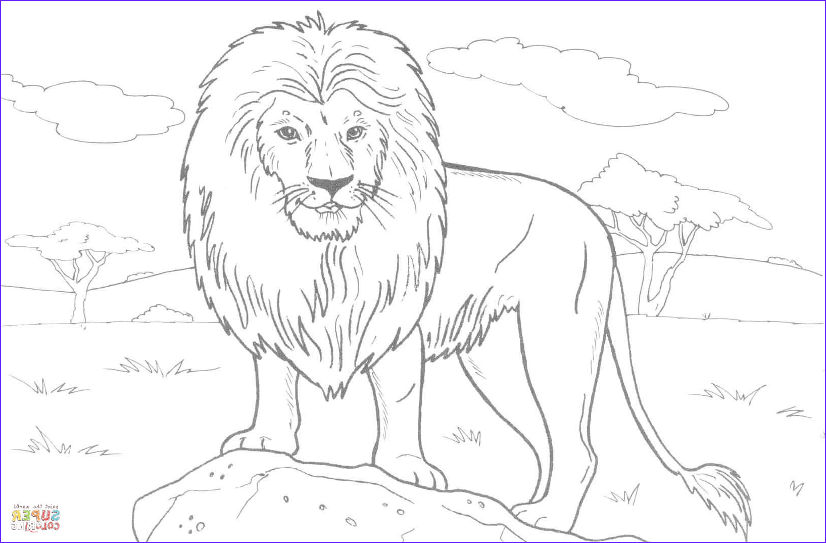 Animal Coloring Pictures Cool Photos African Lion Coloring Page