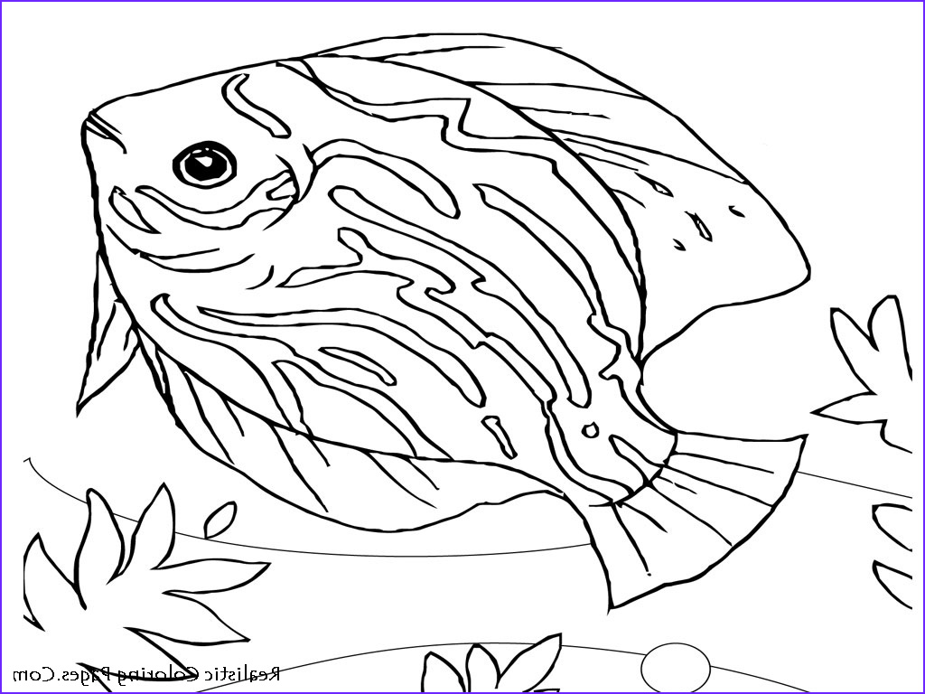 Animal Coloring Pictures Elegant Collection Realistic Animals Coloring Pages