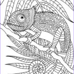 Best Adult Coloring Book Best Of Photos 1086 Best Adult Colouring Animals Zentangles Images On