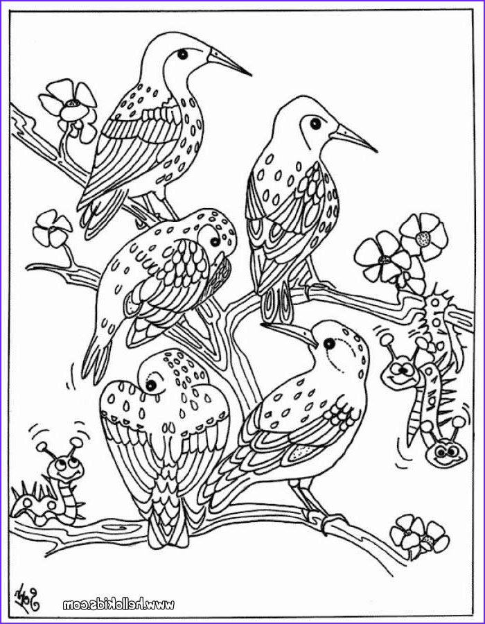 Bird Coloring Pages for Adults Beautiful Photos Bird Group Coloring Pages Hellokids