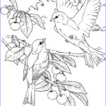 Bird Coloring Pages for Adults Beautiful Stock Wel E to Dover Publications 6 Bird Colouring Pages