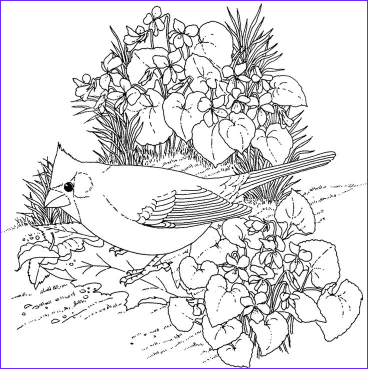 Hard Bird Coloring Pages for Adults Enjoy Coloring