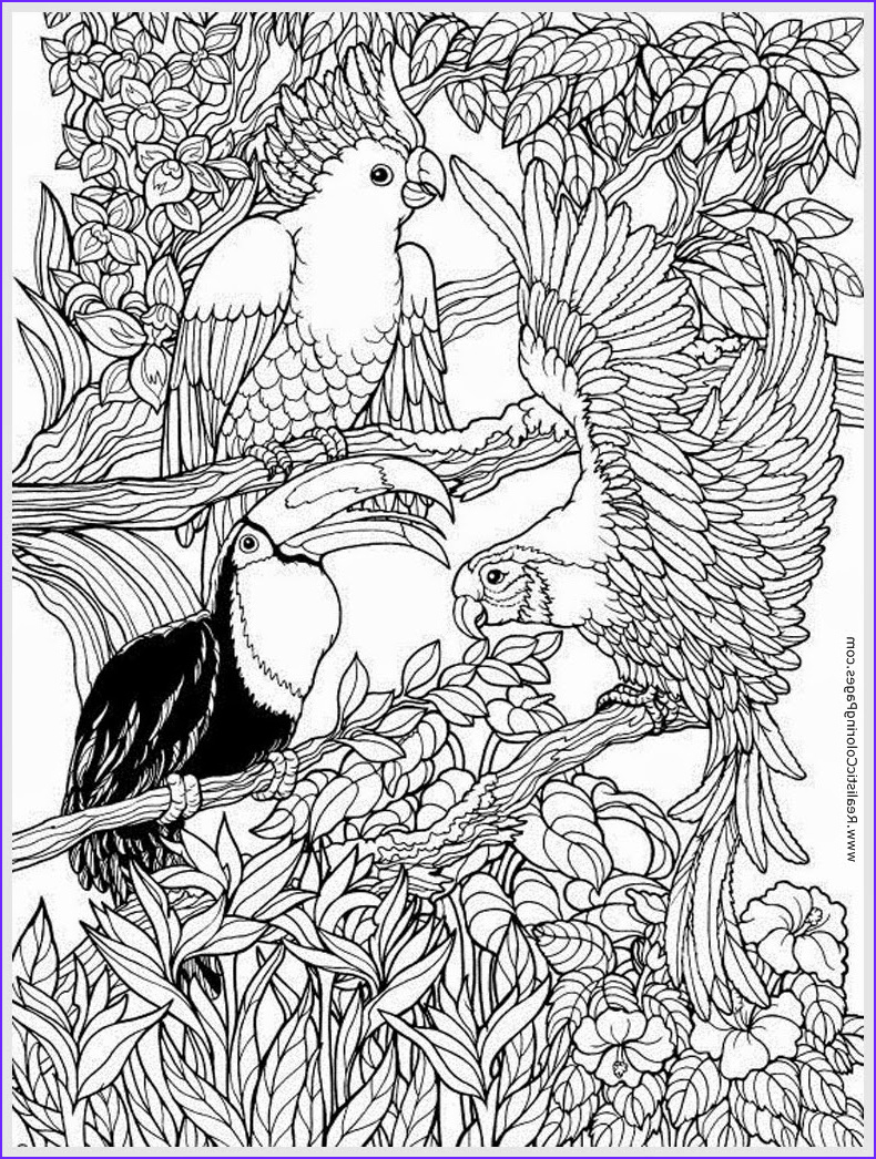 Bird Coloring Pages for Adults Elegant Photos Parrots Bird Adult Free Coloring Pages
