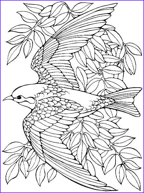 Bird Coloring Pages for Adults Luxury Collection Printable Advanced Bird Coloring Pages for Adults Free