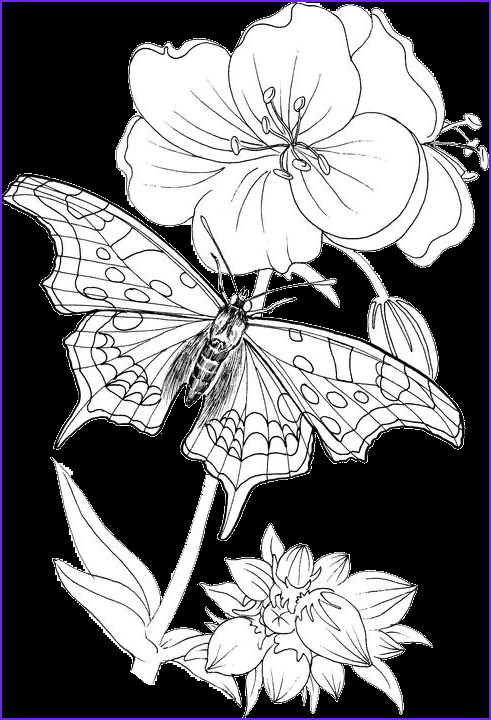 Butterfly Coloring Book for Adults Beautiful Stock butterfly Coloring Pages 24