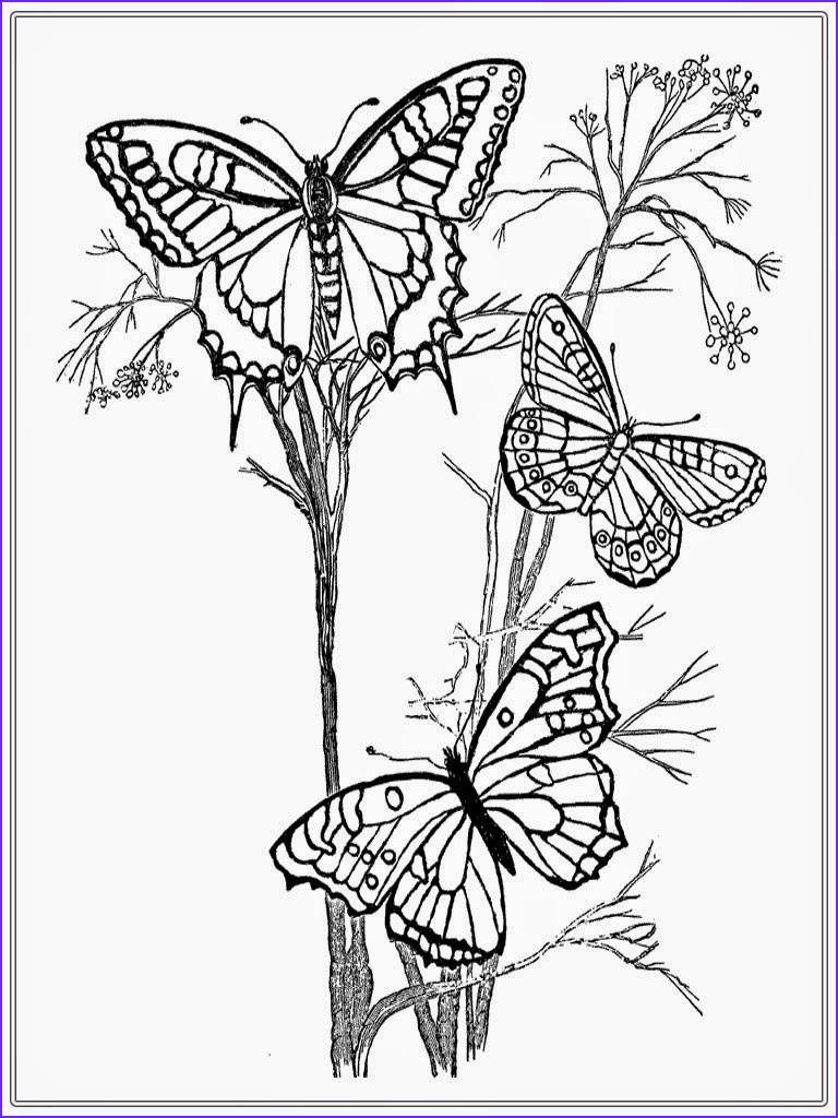 Butterfly Coloring Book for Adults Luxury Photos Adult Coloring Pages butterfly