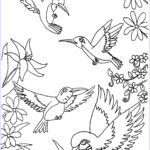 Coloring Pages For Kids Free Beautiful Collection Free Printable Hummingbird Coloring Pages For Kids